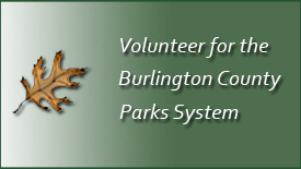 Volunteer for the Parks System