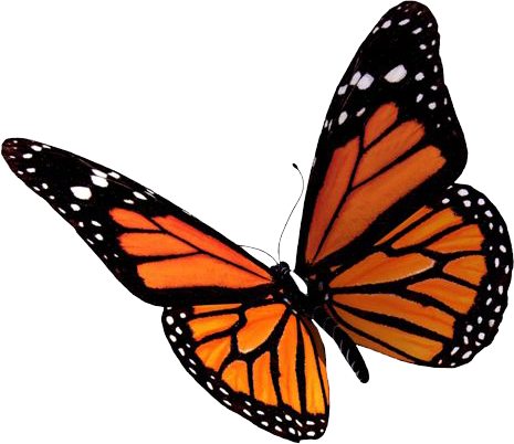 Flying-Butterflies-PNG-Clipart